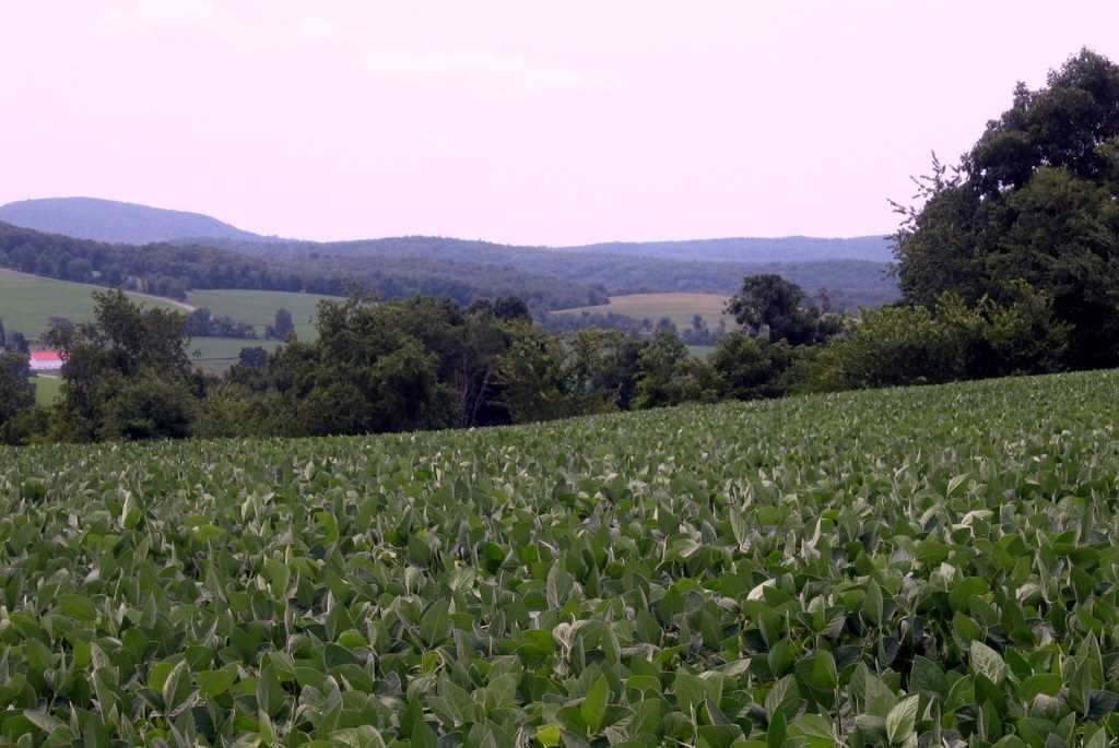 Land for Sale at ELSOHN ROAD ELSOHN ROAD Gallatin, New York 12567 United States