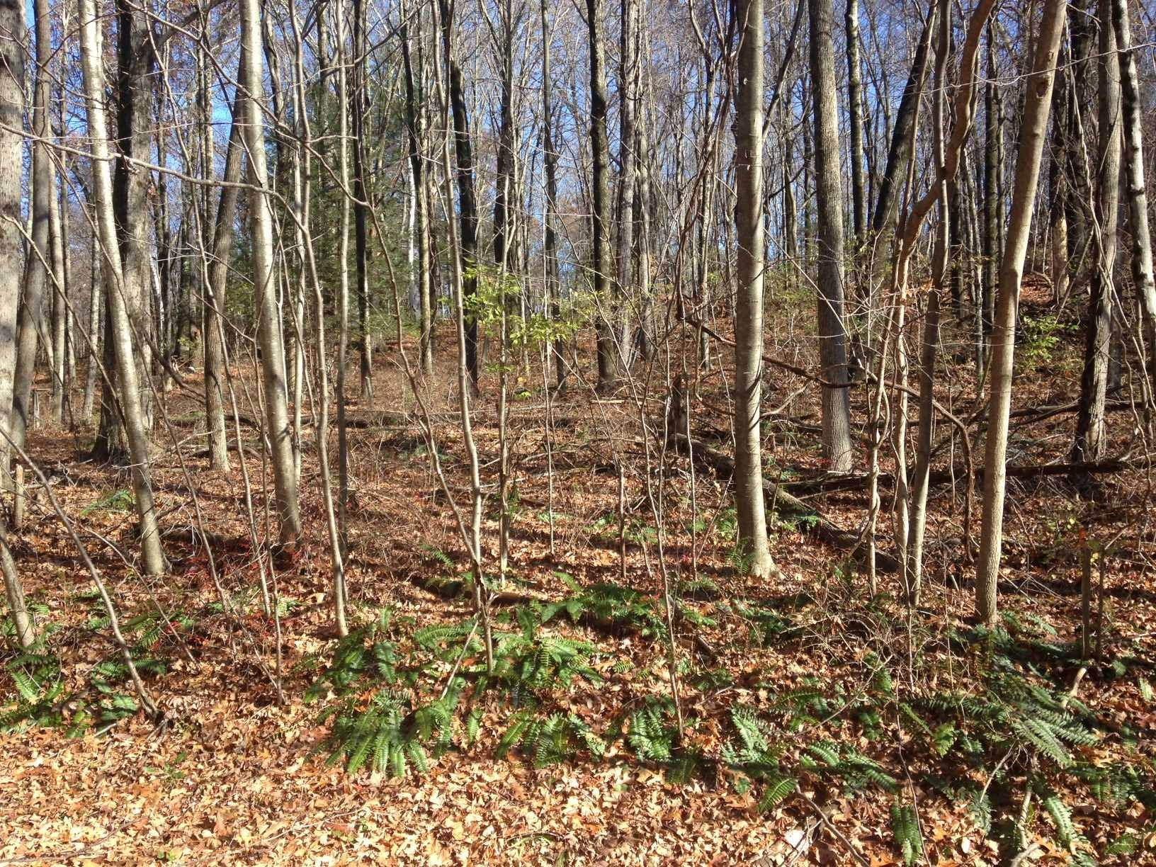 Land for Sale at LOT #37 WOODLAND Road LOT #37 WOODLAND Road Amenia, New York 12501 United States