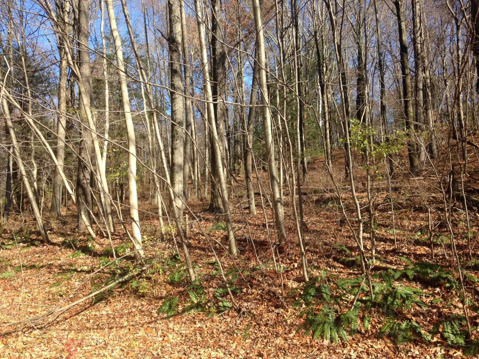 Land for Sale at LOT #39 WOODLANDS Road LOT #39 WOODLANDS Road Amenia, New York 12501 United States