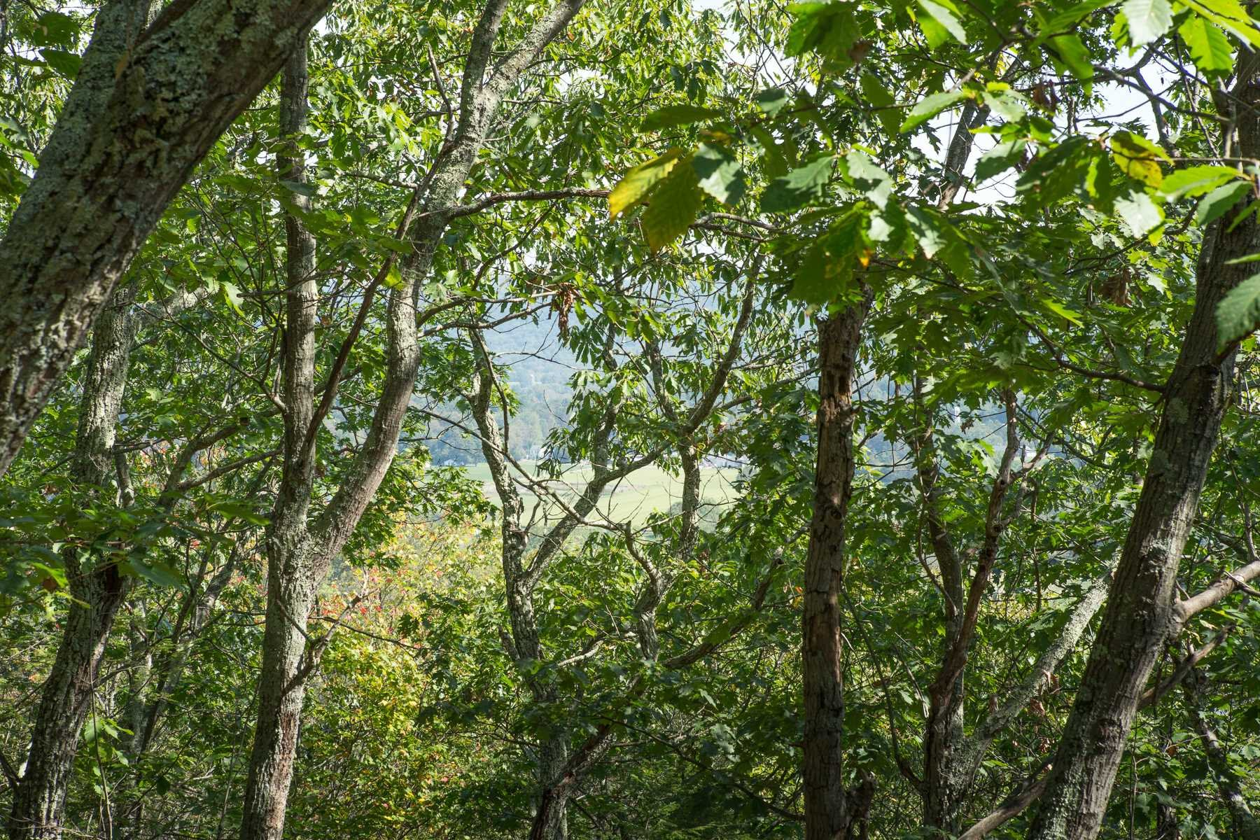 Land for Sale at CART Road CART Road Dover Plains, New York 12522 United States