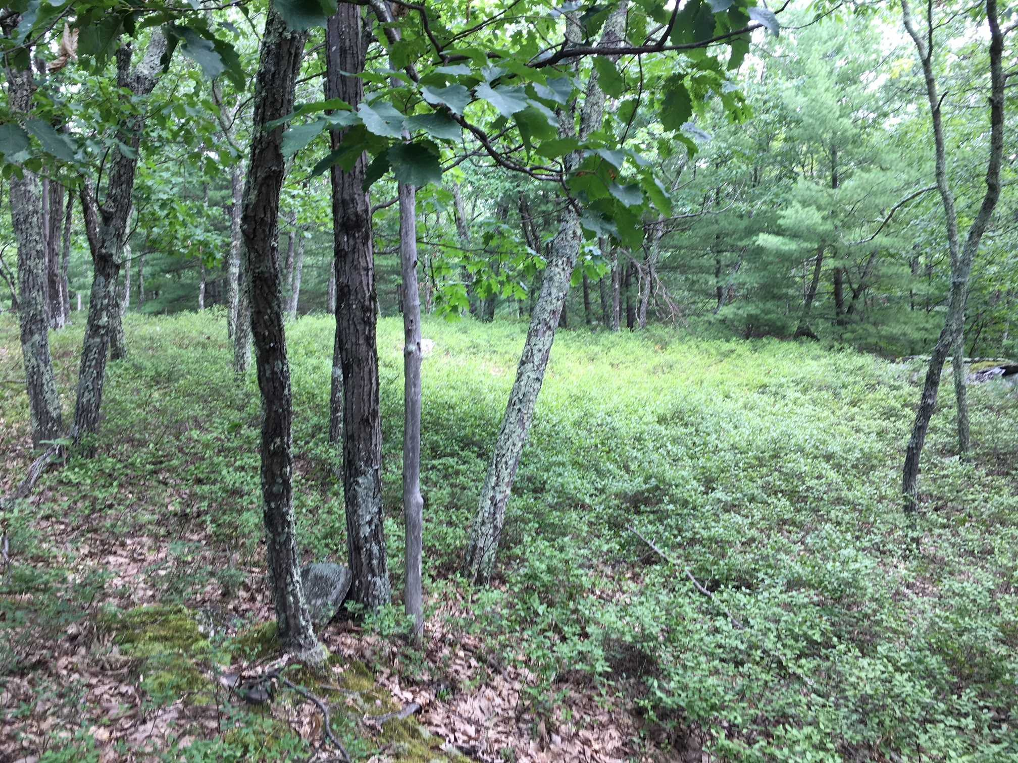 Land for Sale at ROGUE HARBOR Road ROGUE HARBOR Road Kerhonkson, New York 12446 United States