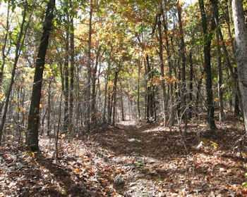 Land for Sale at NEAR ROAD EXTENSION NEAR ROAD EXTENSION Gallatin, New York 12567 United States