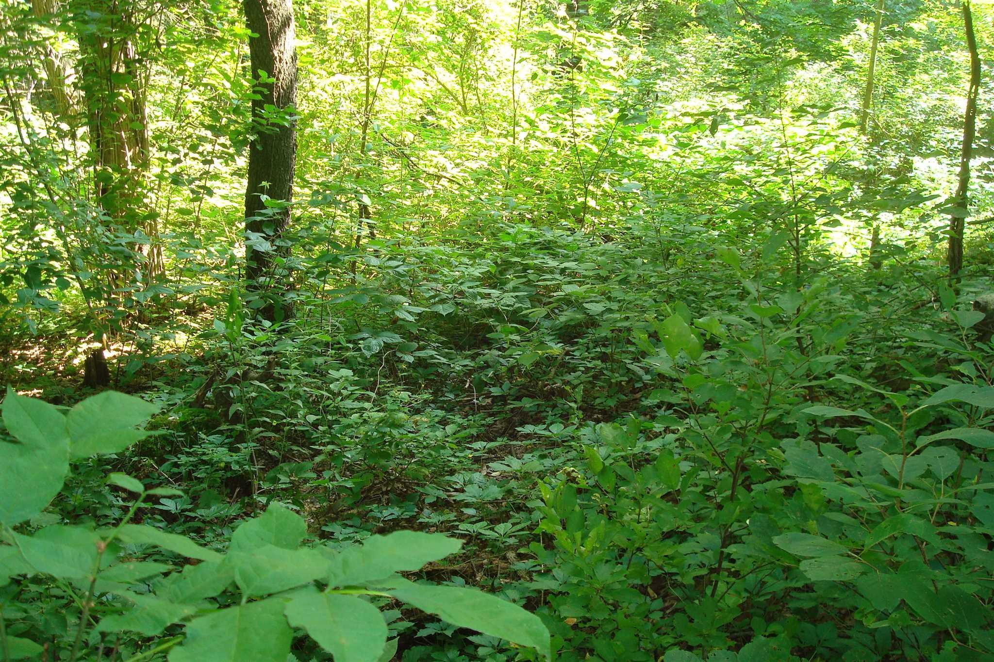 Additional photo for property listing at MASTEN MASTEN Pleasant Valley, New York 12569 United States