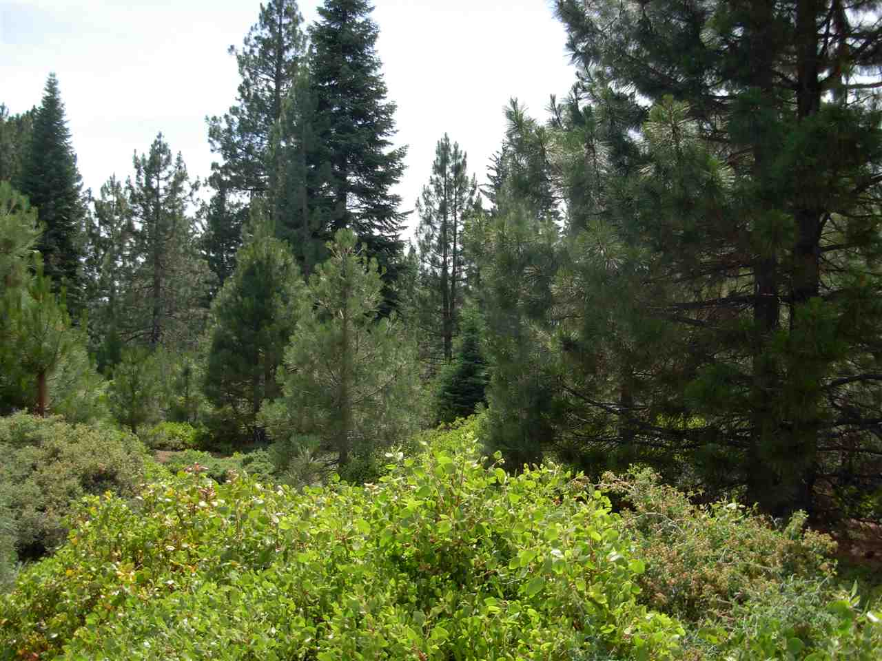 246 Bailey Creek Drive, Lake Almanor, CA 96137