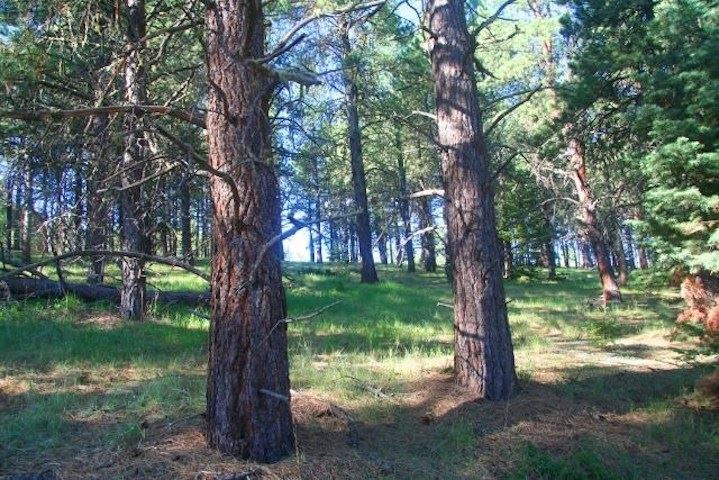 Lot 1311 Brazos, Angel Fire, NM 87710