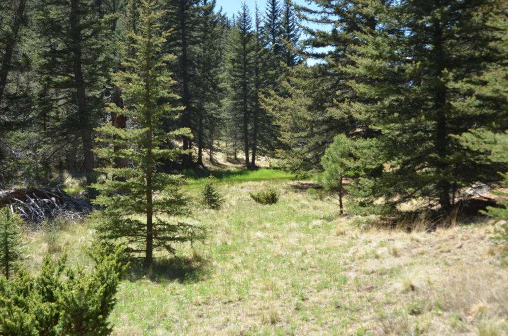 1 acre BLR, Black Lake, NM 87710