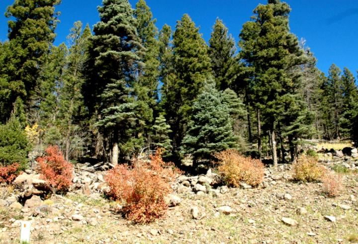 Lot 1296 Pleasant Valley Overlook, Angel Fire, NM 87710