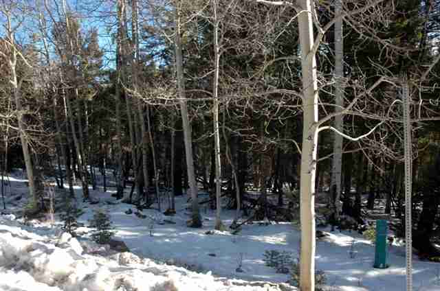 44 Back Basin Rd, Angel Fire, NM 87710