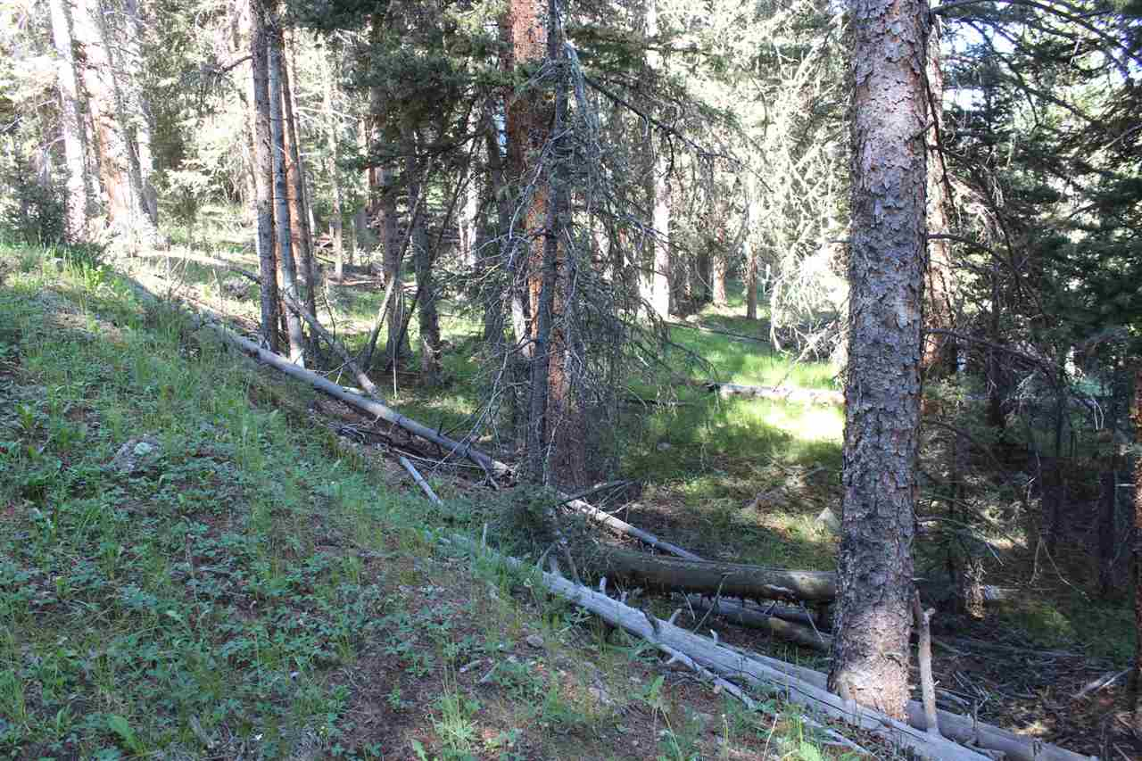 Lot 44 Callle Contento, Red River, NM 87758