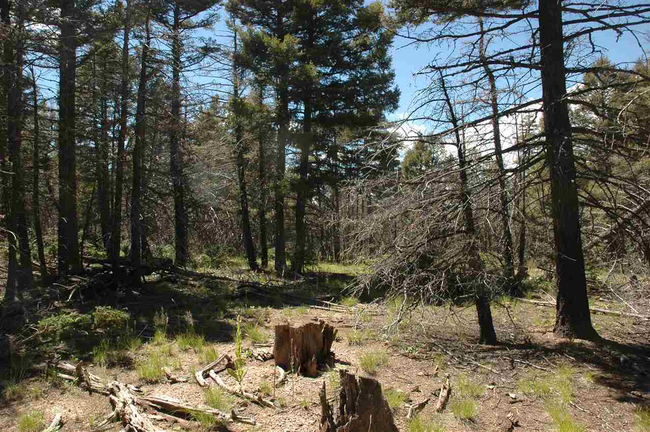 311 south vail overlook, angel fire, NM 87710