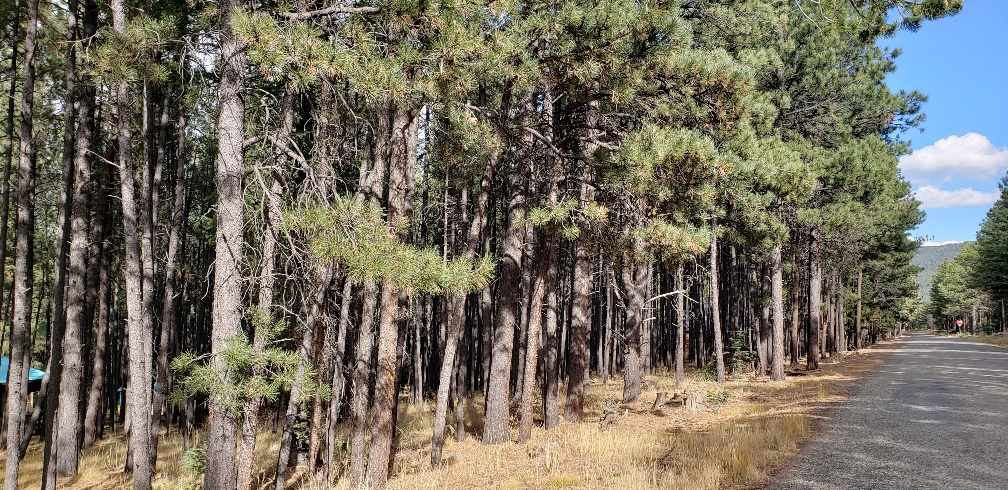 Lot 887 Calle de Luna, Angel Fire, NM 87710