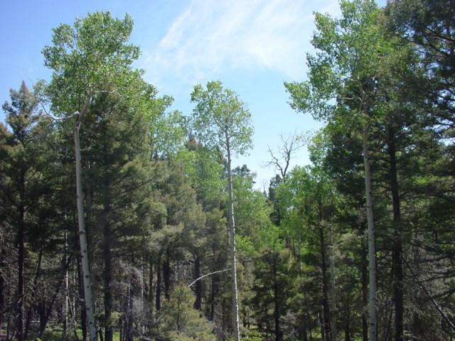 2982 Cieneguilla Overlook, Angel Fire, NM 87710