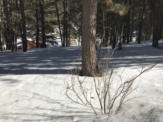 Lot 11 Monte Verde One 1 3B, Angel Fire, NM 87710
