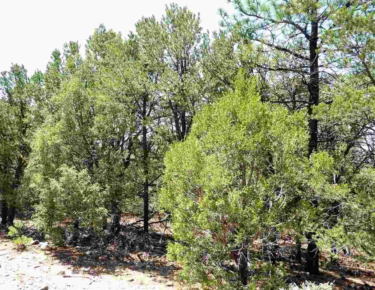 Lower Pinabete Road, Questa, NM 87556