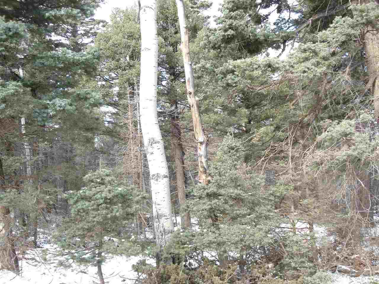 Lot 49 Back Basin Road, Angel Fire, NM 87710
