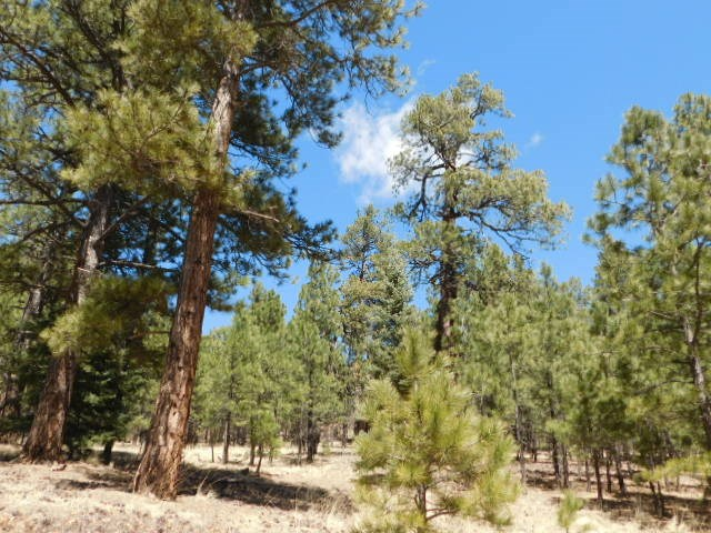 Lot 12 Sawmill Way, Angel Fire, NM 87710
