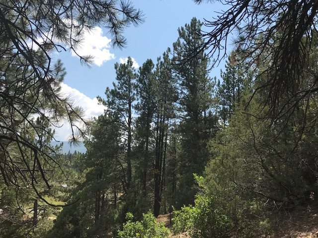 24.35 acres Off hwy 64East, Taos, NM 87571