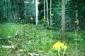 http://search.taosmls.net/taos_mls/images/99409-16.JPG