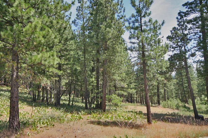 Land for Active at 332 Gold Nugget Lane Graeagle, California 96103 United States