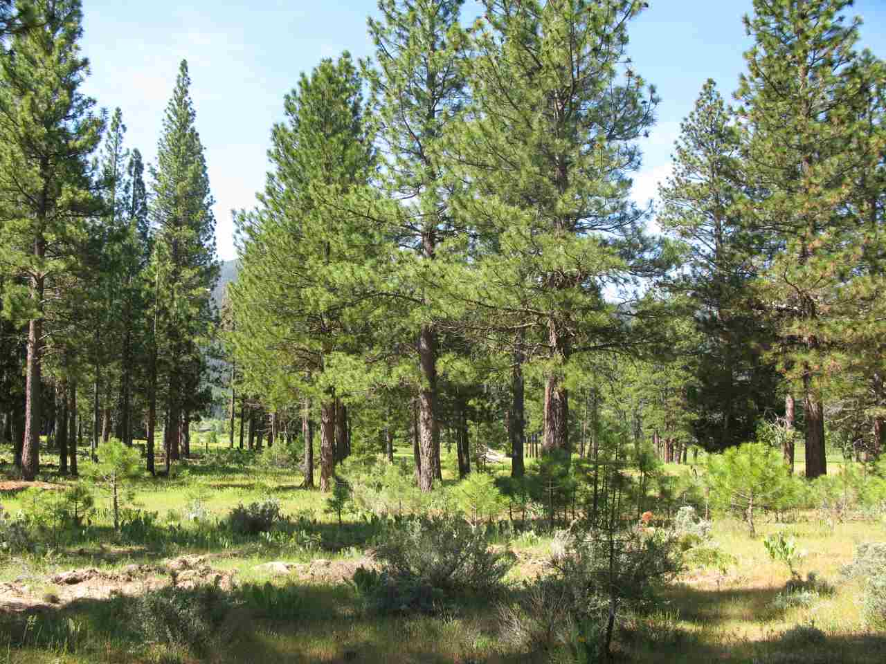 Land for Active at 581 Redtail Loop 581 Redtail Loop Clio, California 96106 United States