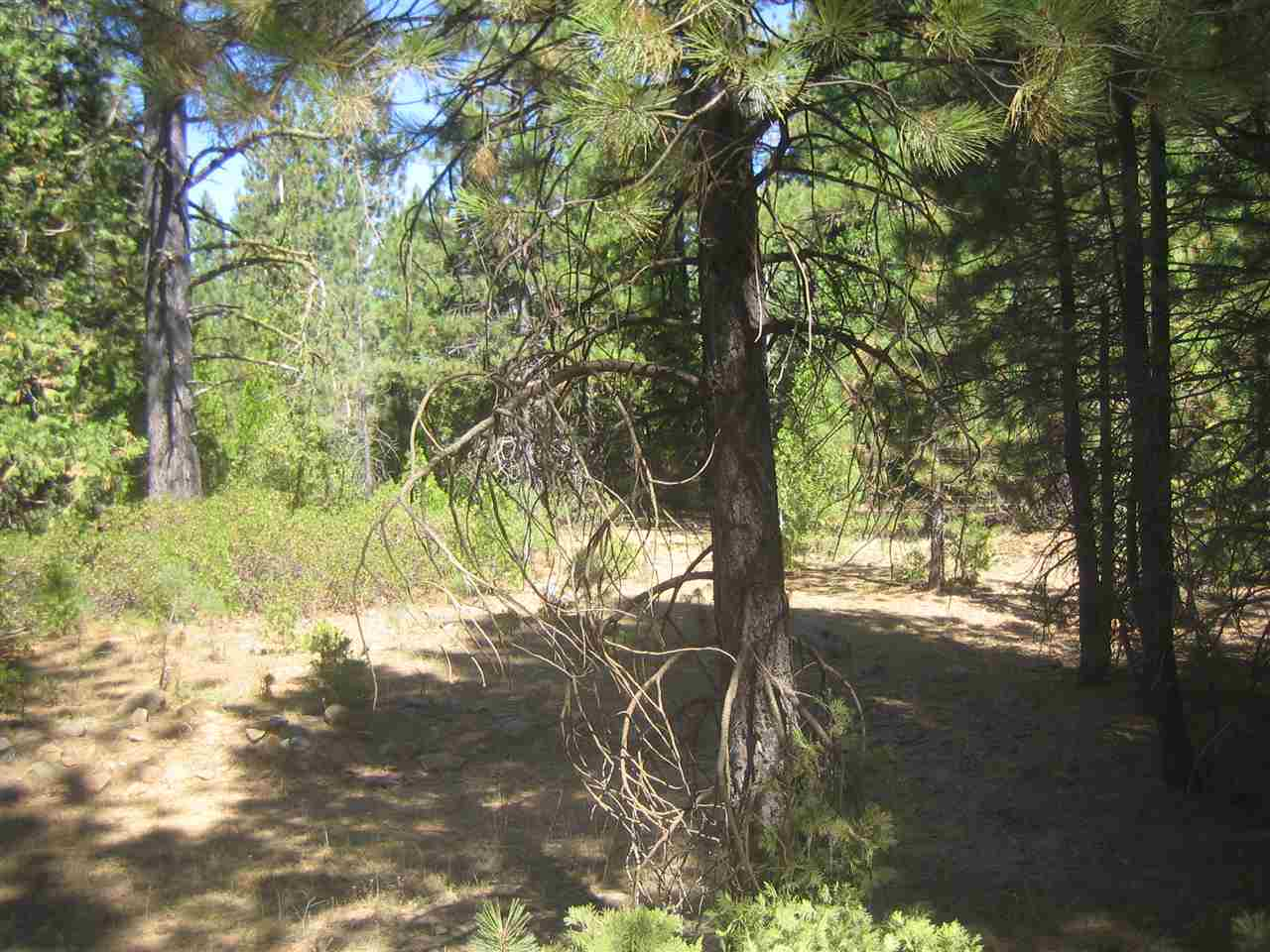 Acreage for Active at 1100 Pinion Pine Circle 1100 Pinion Pine Circle Johnsville, California 96103 United States