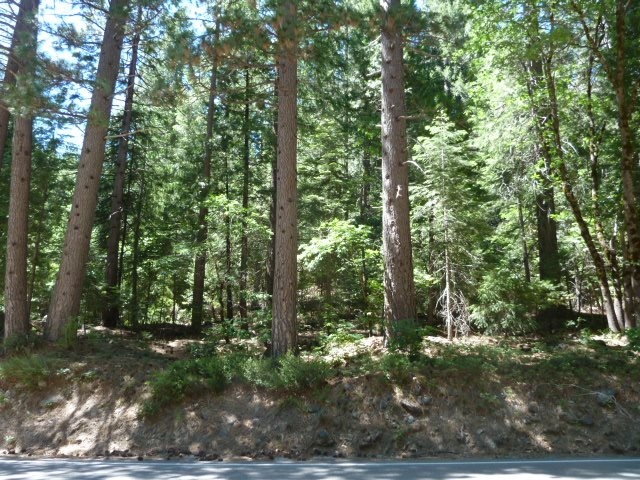 Acreage for Active at Highway 49 Sierra City, California 96125 United States