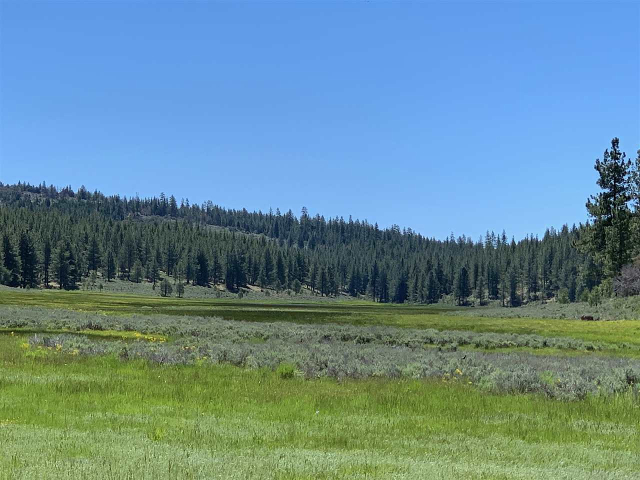 Superficie en Acres por un Venta en Frenchman Lake Road Chilcoot, California 96105 Estados Unidos