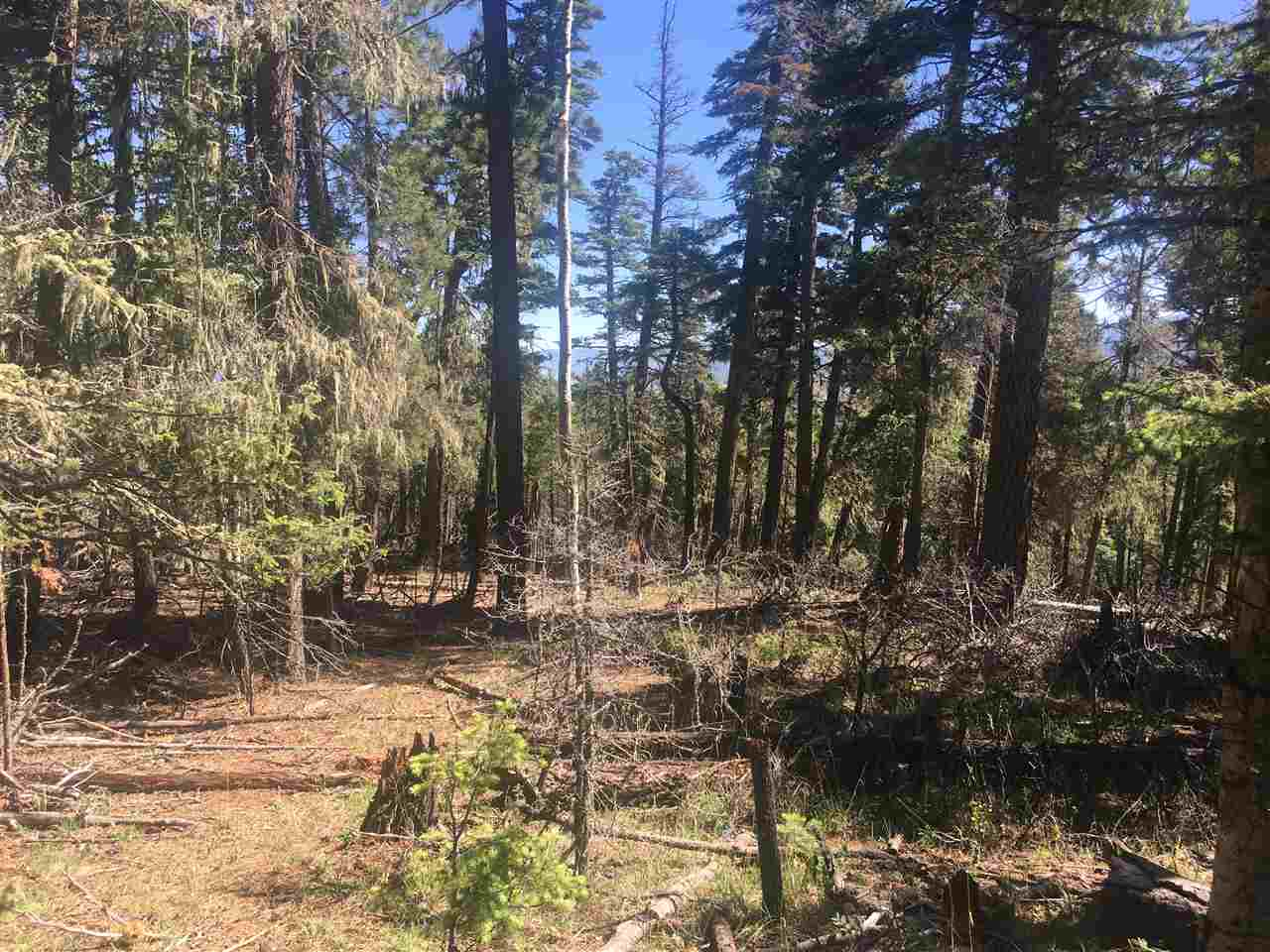 This is a great lot filled with mature Aspen and Pine trees.  It is a flat, buildable lot with fantastic views of the surrounding mountains.   Wildlife is very abundant in Angel Fire.   Welcome to the mountains!