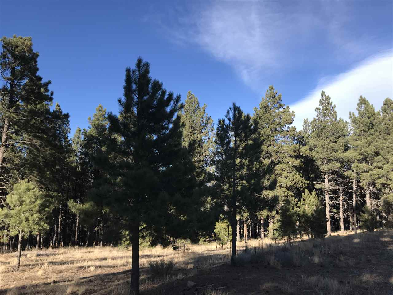 2.38 acres wooded lot with gentle slope and potential Wheeler Peak views.  Close to town center, golf, tennis, walking path and Country Club.  Village sewer available and PID is paid off.