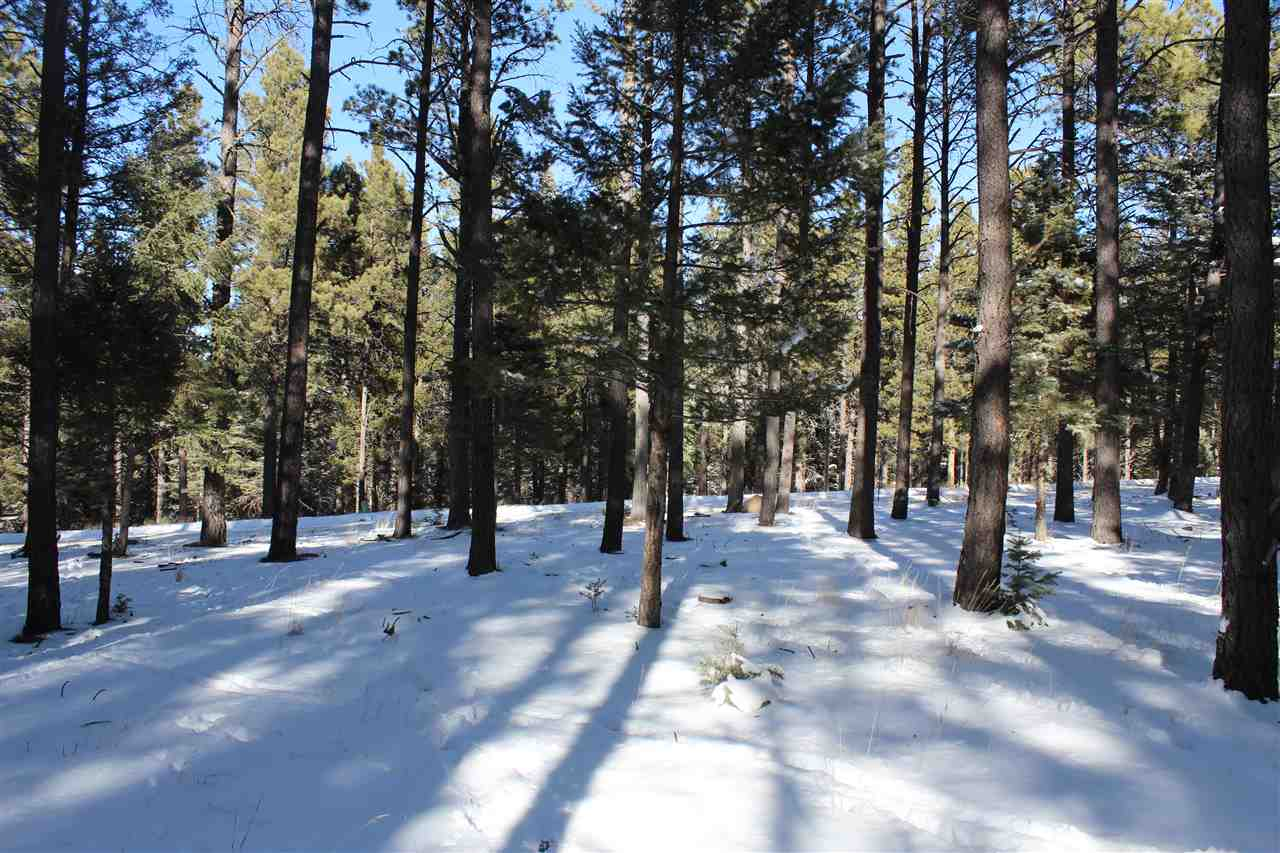 Wonderful, wooded lot close to the village center and all the great walking trails, green belt etc. This lot is in the PID district but PID is fully paid.