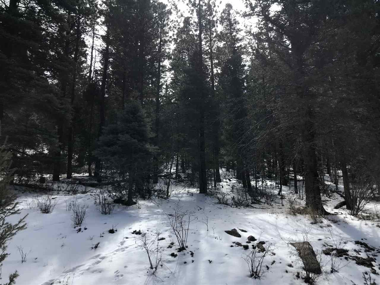 Wonderful 1.19 acre lot, zoned for High Density and just a stones throw to the resort. Once lot is thinned, will have great Wheeler Peak views as well as many other areas of Angel Fire.