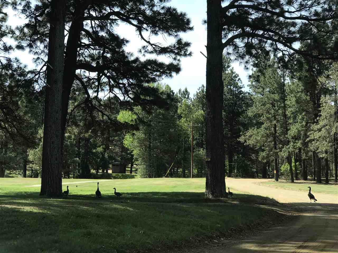 This lot is truly too good to be true! .56 of an acre located in Pendaries Village just off hole 15 of the Pendaries Golf Course for $4,500. You read right, $4,500.  This tranquil place has so much to offer if you love to enjoy the great outdoors. Pendaries is located just about a hour out of Santa Fe, and an hour out of Taos. Las Vegas New Mexico is close in proximity as well. While staying at the resort, jump on a golf cart and spend your day golfing. When you're ready for a break, relax on the Snack Bar Restaurant patio and just take in the view. The resort also has another restaurant and lodging facilities are available if your not yet ready to build. Wildlife can also been seen throughout the resort. Pendaries is hidden treasure just waiting to be explored!