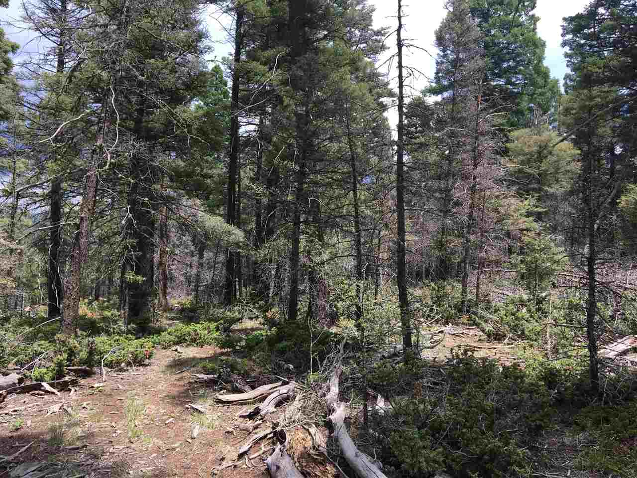 Gorgeous views of Wheeler Peak from this gently sloping/level, ready-to-build lot! This property has been thinned and the building site has been cleared. Driveway is in. Utilities are already to building site. The property is ready for you to build your dream home! This 1.74 acre lot has views of Wheeler Peak, Eagle Nest Lake, Mt. Baldy and Touch-Me-Not. Beautiful sunsets! Just minutes from town, yet very secluded. Walk one block to look over the Angel Fire Ski mountain. Access is easy, even in winter and driveway is level. Lots of trees and wildlife
