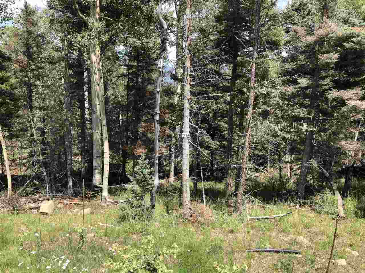 A beautiful 5.07 acre piece of land that overlooks the western side of the hill towards the ski area. Once this lot is thinned, build your dream home with magical views. Close to the national forest and hardly any neighbors!