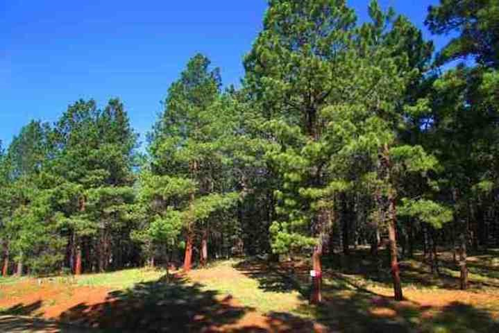 Great, secluded lot, close to town with sewer available !