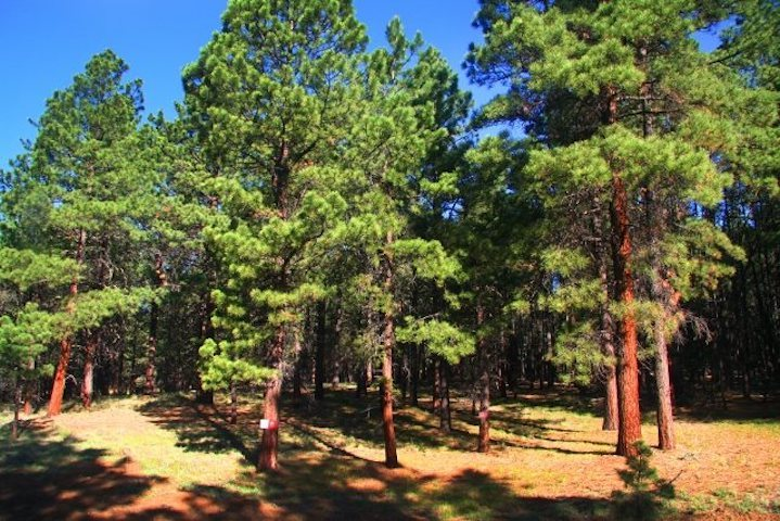 Flat corner lot with mature pine trees. Very accessible lot in all season and close to village core and all the resort amenities...yet a remote feeling. Lot is owned by the PID and has a annual PID payment of approximately $$3,635 or a one time payoff fee of approximately $29,300.