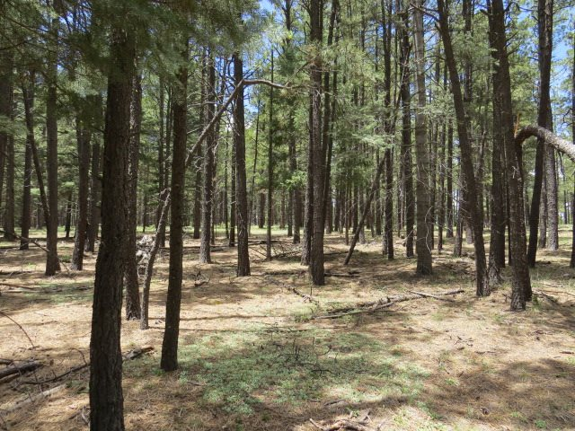 Lot 121 San Juan Drive, Angel Fire, NM 87710