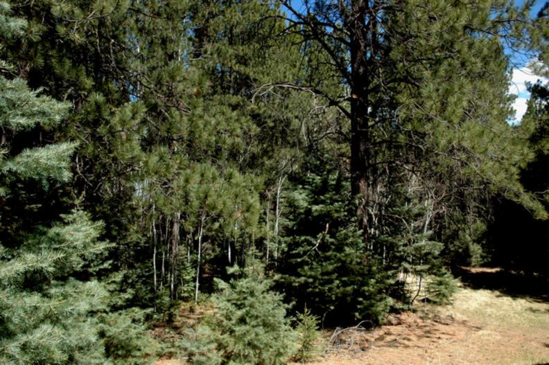 Lot 31 Snowmass Rd, Angel Fire, NM 87710