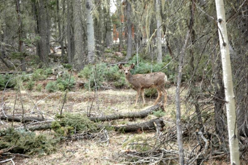 Lot 2 blk C Mountain Lake Way, Angel Fire, NM 87710