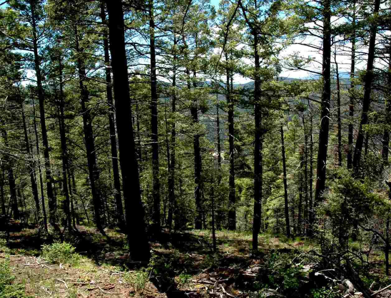 Lot 400 Vail Loop, Angel Fire, NM 87710