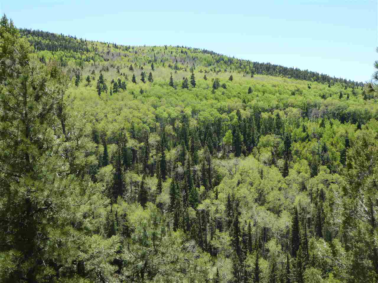 Lot 5 Apache Canyon, Taos, NM 87571