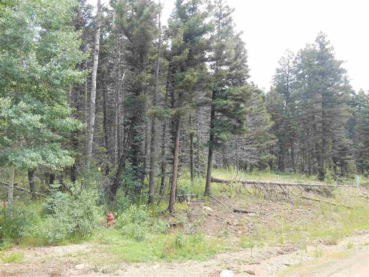 Nice buildable lot on corner of Royal and Vista Del Sur.  Gentle slope, heavily wooded.  Access up and down the mountain good.  Private, quiet location.  Lot backs up to greenbelt and greenbelt is also on opposite side of Royal, directly across from lot.