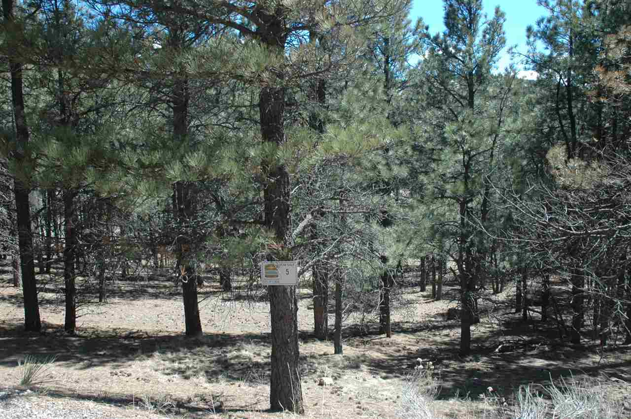 5 alta, angel fire, NM 87710