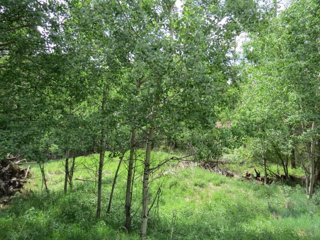 Lot 202 El Camino Real, Angel Fire, NM 87710