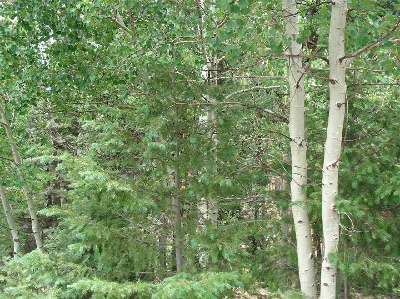 Lot 225 Vista Del Valle, Angel Fire, NM 87710