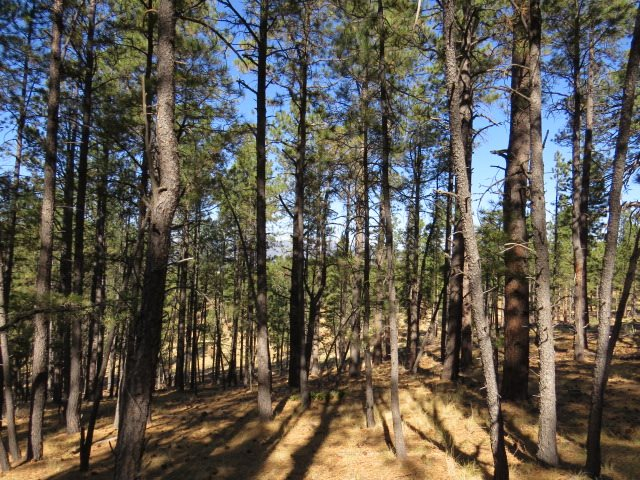 TBD Alta Place Lot 111, Angel Fire, NM 87710