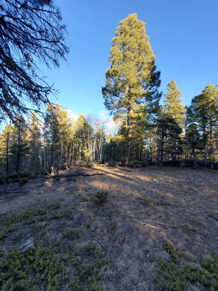 Lot 55 Vermejo Ct, Angel Fire, NM 87710