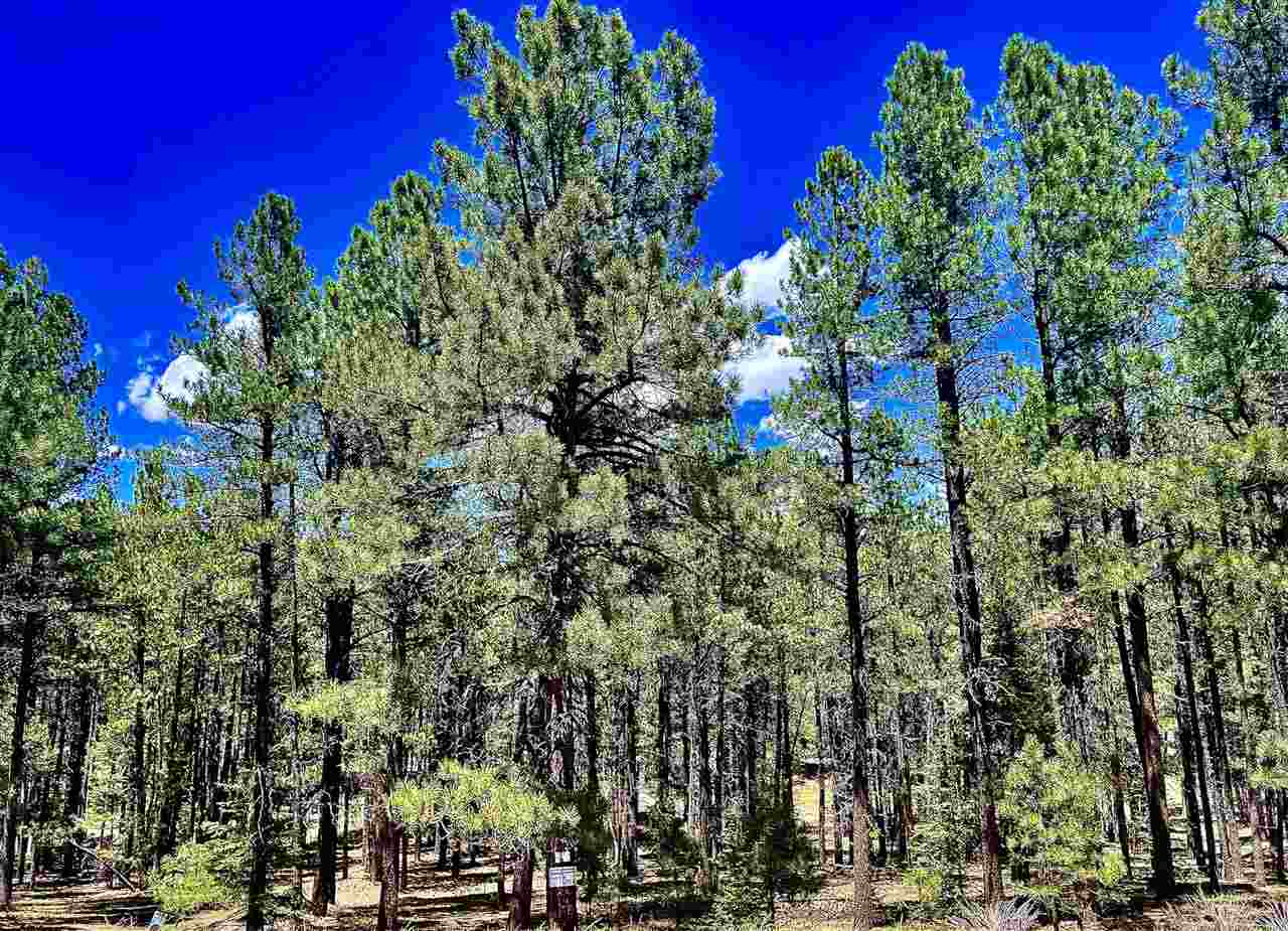Site 864 Conchas Dr, Angel Fire, NM 87710