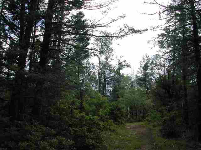 GREAT BUILDING SITE ON A VERY PRIVATE CUL DE SAC.  wALKING TRAIL FROM PROPERTY AND VIEWS FROM TRAIL.  AMENITIES CLOSE, UTILITIES TO LOT.