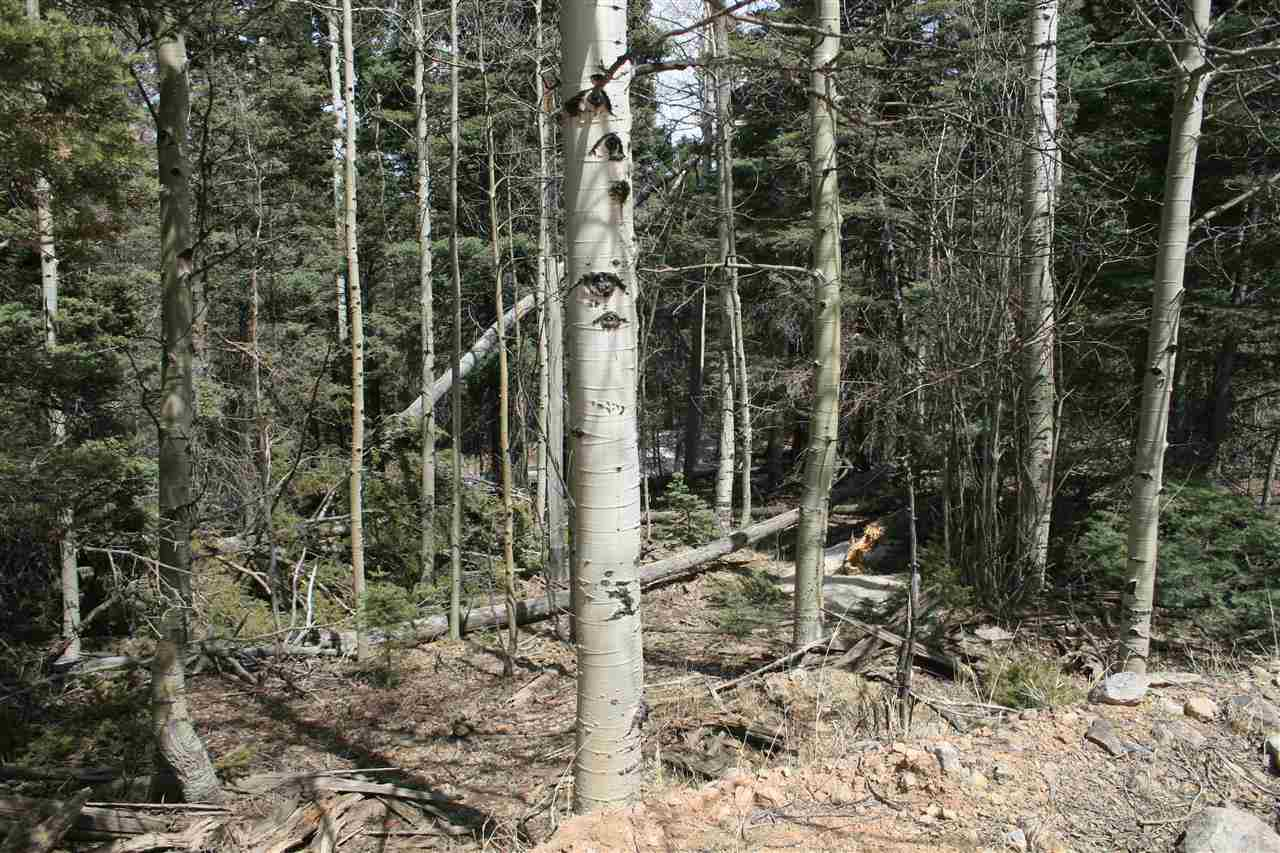 This beautiful lot becomes more wonderful after you build.  With a short drive you have access to the back side of the ski mountain.  Secluded but on a well maintained road.  Full of large Aspen and pine.  Plenty of wildlife also love this property.  Perfect spot to watch elk and deer roam through.